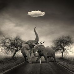 I like the cloud, I think replace the elephants with a giraffe and the cart…