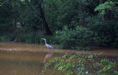 Stork in the Woods by D.L.Tharpe Photography