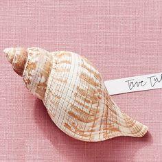 True Tulip Shell - America's Most Popular Seashells - Coastal Living