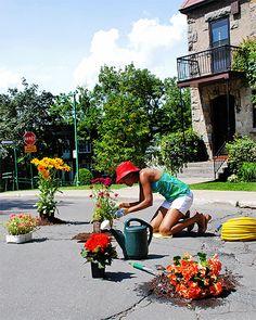 Sembrando flores en huecos en las calles Montreal
