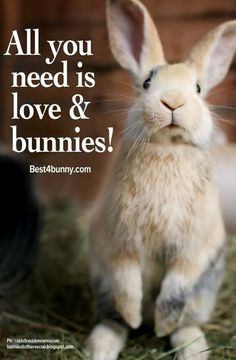 Bunnies contain love and therefore all you really need is a bunny.