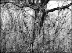 This artist blows me away with all of his graphite work. I think he's in Michigan and provides annual classes. While his portraits are breathtaking, I don't think they would be a good fit in someone's living room (mainly, my own), so I included Tree Drawing II for this board. Tree Drawing II by Nimra - 5 months