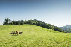 Das #Granithügelland beim #Reiten entdecken. Weitere Informationen zu #Reiturlaub im #Mühlviertel in #Österreich unter www.muehlviertel.at/reiten - ©Oberösterreich Tourismus/Erber