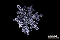 Snowflake by Reinhard Loher on Snowflakes, Brooch, Jewelry, Nature, Brooch Pin, Jewlery, Snow Flakes, Jewels, Jewerly