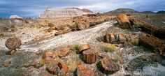 Petrified Forest National Park - photo by QT Luong / www.terragalleria.com