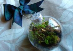 Terrarium, top 10, DIY, holiday, gift guide, gardening, plants, christmas    http://inhabitat.com/10-amazing-terrariums-you-can-build-as-holiday-gifts/