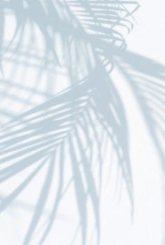 Palm tree shade #eresparis #inspiration #blue #purple #shadow #light #ss16collection #lingerie