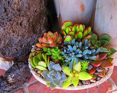 Oval Handcrafted Succulent Arrangement by RotdCreations on Etsy
