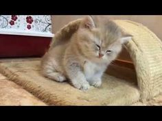 Cute Kittens Will Warm Your Heart - YouTube