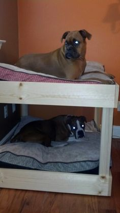 Dog bunk beds.