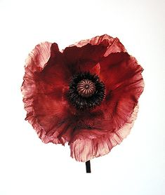 View Poppy Burgundy, New York by Irving Penn on artnet. Browse upcoming and past auction lots by Irving Penn. Still Life Photography, Fine Art Photography, Flower Photography, Photography Ideas, Fashion Photography, Wedding Photography, Irving Penn Flowers, Fashion Fotografie, Salvador Dali