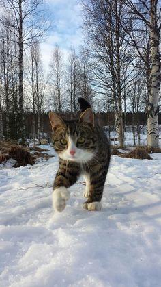 """""""Snow Cat by Geigoz / 500px """""""