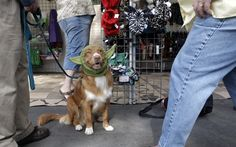 7 000 Dogs Converge At Alameda County Fairgrounds For Show Dogs