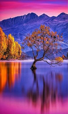 ✧ Mesmerizing Nature ✧ - mthrworld: Lake Wanaka, New Zealand by:. Beautiful World, Beautiful Images, Nature Pictures, Cool Pictures, Landscape Photography, Nature Photography, Travel Photography, Mountain Sunset, Photos Voyages