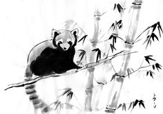 The other red panda by Seiga.deviantart.com on @deviantART