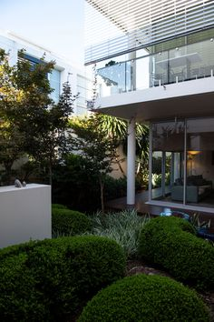 Downsizing a Mosman Urban Garden - Michael Cooke Garden Design Internal Courtyard, Habitats, Wildlife, Sidewalk, Home And Garden, Urban, Landscape, Nature, Plants