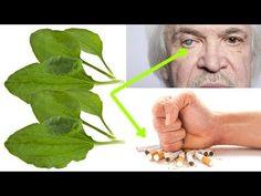 Ta roślina rośnie wszędzie, oduczy palenia, naprawi nerwy i wątrobę oraz uchroni oczy. - YouTube Natural Remedies, Hair Accessories, Health, Nature, Youtube, Beautiful, Garden, Ideas, Congested Nose