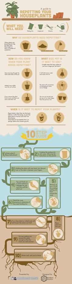 Need to Repot Your Houseplants? Use This 10-Step Guide to Repot Your Plants Properly! http://homeandgardenamerica.com/houseplant-repotting-guide