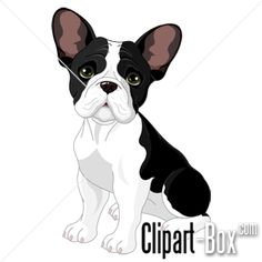 CLIPART BABY BULLDOG