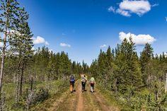 Schweden wandernd entdecken Outdoor, Mountains, Nature, Travel, Pilgrims, Hiking Trails, Sweden, National Forest, Hiking