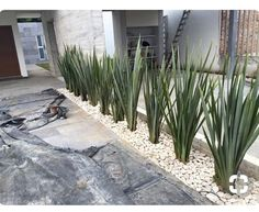 Modern Landscaping, Front Yard Landscaping, Backyard Patio, Landscaping Ideas, House Landscape, Landscape Design, Modern Front Yard, Yard Design, Garden Planters
