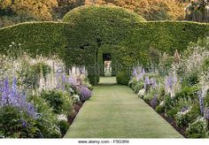 Levens Hall, Cumbria, UK. A late 16c manor house famous for its eccentric topiary garden. The 300 year old beech - Stock Image
