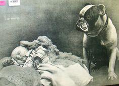 """1907 Print, """"Bulldog Guarding Baby"""",  called """"On guard. """""""