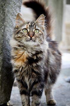 Beautiful street cat, Istanbul