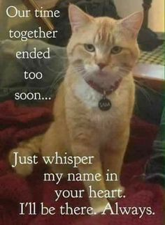 I miss my Skeeter so much that at times the grief is unbearable 🐾 💔😭 Pet Loss Quotes, Cat Quotes, Animal Quotes, I Love Cats, Cute Cats, Funny Cats, Crazy Cat Lady, Crazy Cats, Beautiful Cats