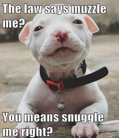 Pit Bulls! I LOVE THEM! i dont get how people could be so mean toward them!