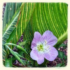 Found on the Harriet K. Maxwell Desert Wildflower Loop Trail