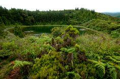 SIARAM :: Zonas Húmidas :: Lagoa do Areeiro, Sao Miguel Island, Azores, Portugal