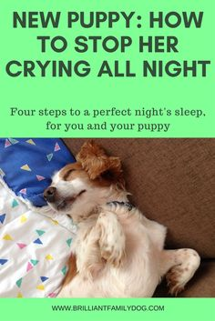 New puppy? how to settle her in fast and ensure a good night's sleep for both of you. Read the article! New puppy? how to settle her in fast and ensure a good night's sleep for both of you. Read the article! Puppy Training Tips, Training Your Dog, Potty Training, Crate Training, Training Classes, Training Pads, Clicker Training Puppy, Kennel Training A Puppy, Leash Training