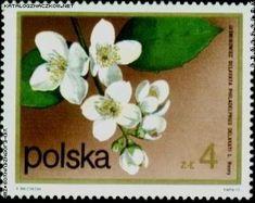 znaczki polskie kwiaty - Szukaj w Google