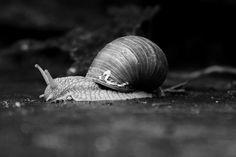 Snail, Pictures, Animals, Photos, Animales, Animaux, Animal, Animais, Slug