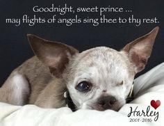 RIP***2015 American Humane Association Hero Dog, Harley, has passed