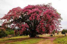 Andradas - Minas Gerais - Brasil