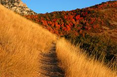 Autumn mountain trail in Provo Utah Mountain Wallpaper, Nature Wallpaper, Mountain Trails, Appalachian Mountains, Pathways, Wilderness, Just In Case, Country Roads, Healing