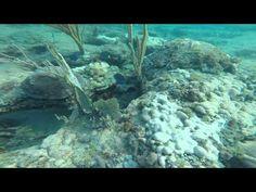 Shore Dive- Fort Lauderdale by the Sea 3/21/15 - http://www.florida-scubadiving.com/florida-scuba-diving/shore-dive-fort-lauderdale-by-the-sea-32115/