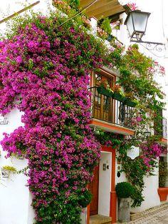 Andalusian façade , bougainvillea everywhere