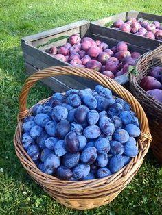 kudy-kam: Švestková povidla z trouby Miraculous Ladybug Toys, Yami Yami, Blueberry, Food And Drink, Homemade, Fruit, Drinks, Cooking, Recipes
