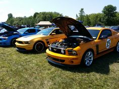 Ford Show 2014 Sanair Mustang Boss 302, Ford