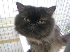 Chorou #cat #satooya