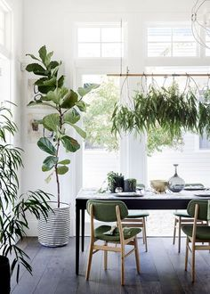 Large fiddle leaf fig in room full of indoor plants. Indoor Trees, Best Indoor Plants, Indoor Garden, Indoor Planters, Deco Jungle, Living Room Plants, House Plants, Patio Plants, Scandinavian Home