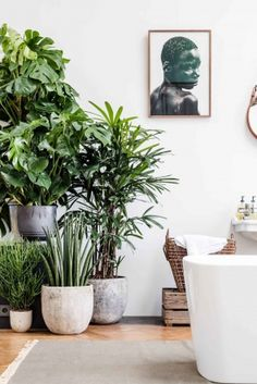 Great mix of plants (split leaf philodendron, monstera, entia palm, howea forsteriana & Euphorbia cedrorum) Monstera Deliciosa, Philodendron Monstera, Interior Plants, Interior And Exterior, Interior Modern, Modern Decor, Midcentury Modern, Botanical Interior, Tree Interior