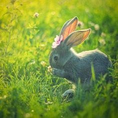 So sweet. #bunny #flower