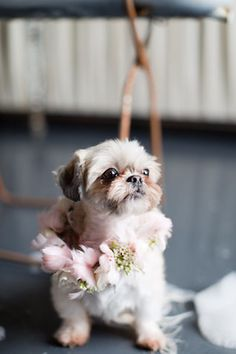 Little dog with a flower garland |- Repinned by Steve's Flowers #IndyWedding #GreenwoodWedding