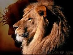 Jesus, the Lion of the tribe of Judah Hard Would You Rather, Would You Rather Questions, Tribe Of Judah, Great Quotes, Me Quotes, Inspirational Quotes, Truth Quotes, Aw Tozer Quotes, Motivational