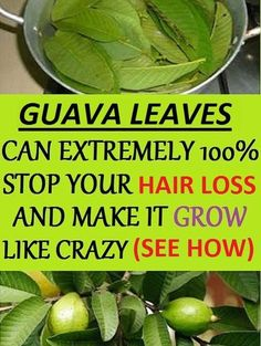 Guava Leaves Can Extremely 100 Stop Your Hair loss And Make It Grow Like Crazy (See How) Hair – Guava leaves are a great remedy for hair . Herbal Remedies, Home Remedies, Natural Remedies, Natural Hair Treatments, Holistic Remedies, Hair Loss Treatment, Health Remedies, Anti Hair Loss, Stop Hair Loss