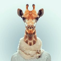 Zoo Portraits by Yago Partal -- Check out his other animals.  Amazing.